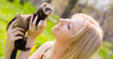 My Love for Cute Ferrets Led Me to an Online Business