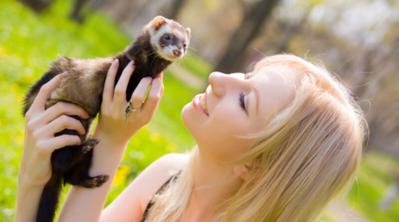 Cute Ferrets start an Online Business