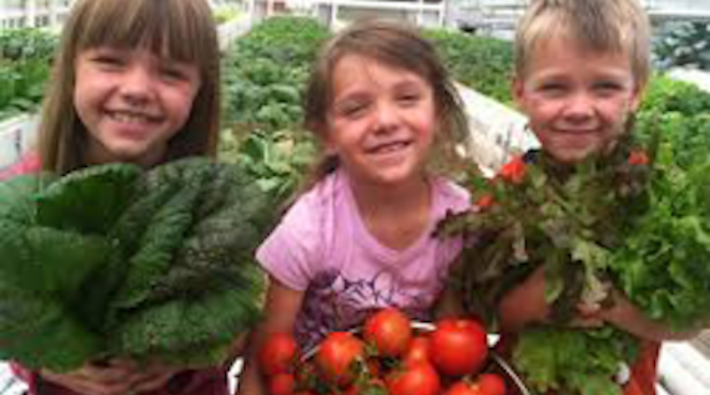 Fresh food – the benefit of home Aquaponic system for the family