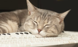 Short haired cat asleep on a computer keyboard